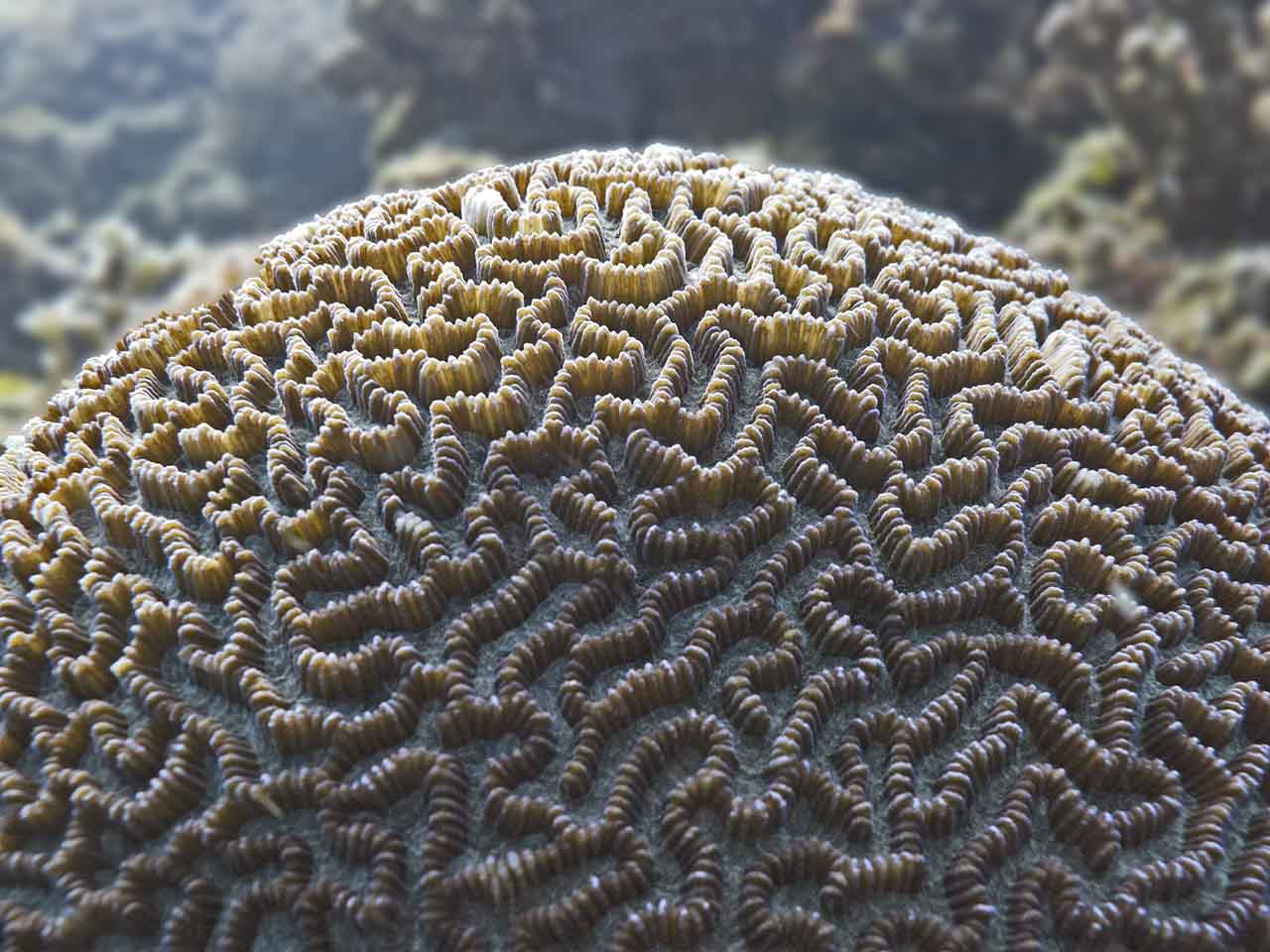 Brain Coral - not as yukky as it sounds
