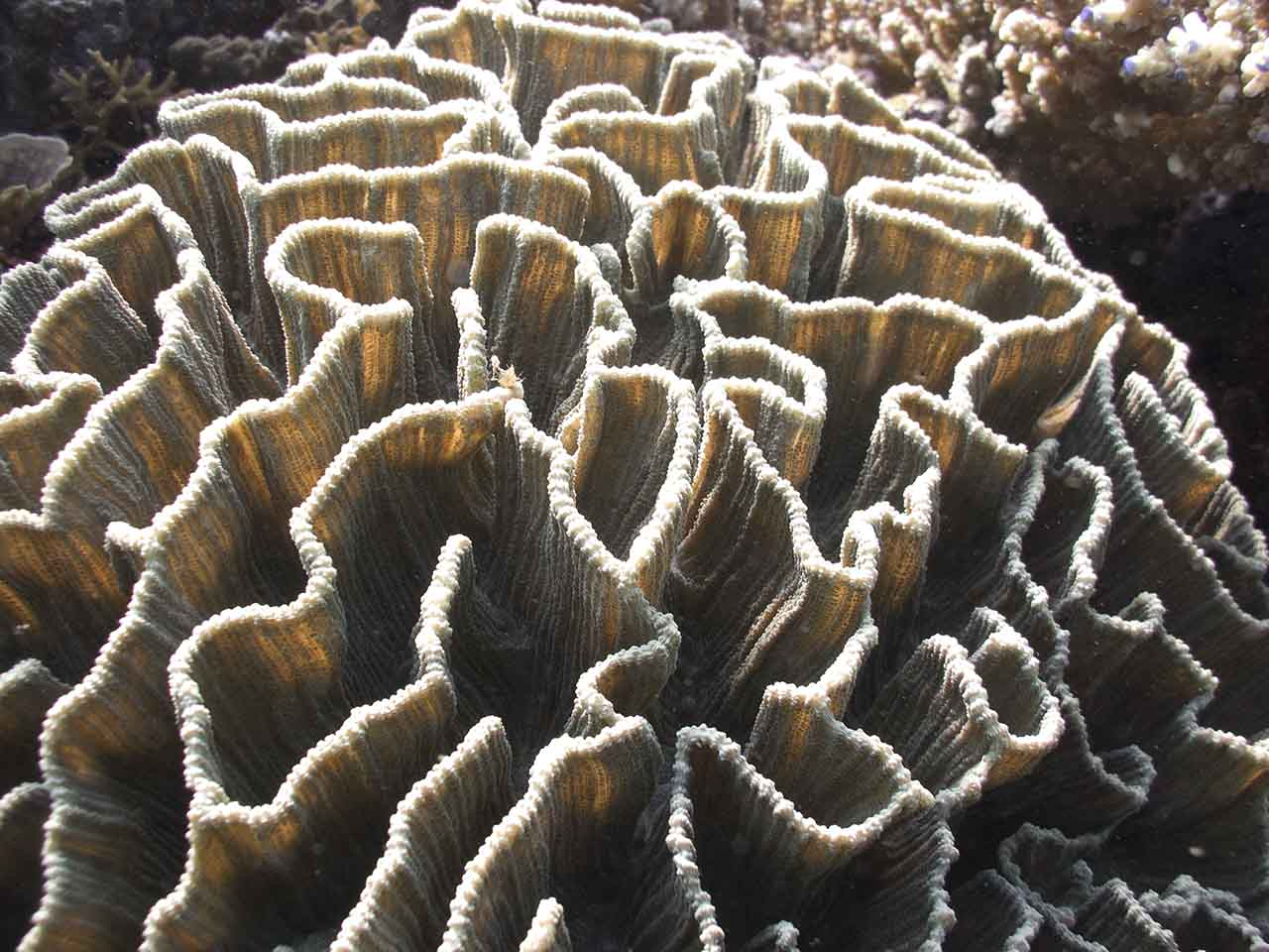 Sunlight glows through thin coral walls