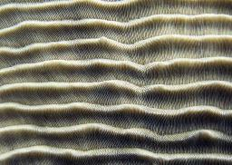 A coral pattern