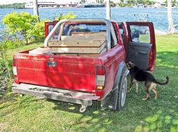Sheba inspects the cargo in the back seat