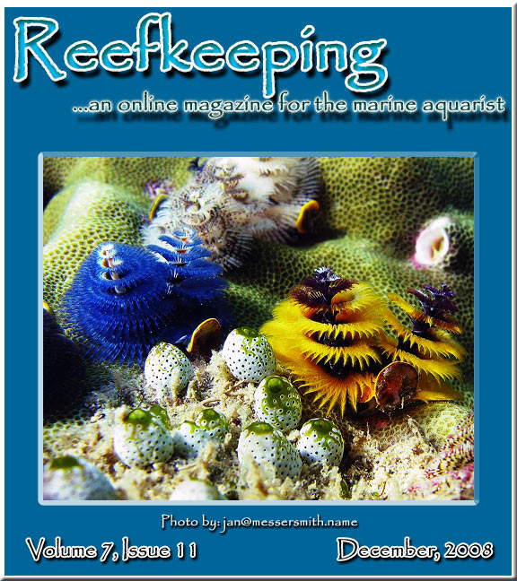 December 2008 cover of Reefkeeping Online Magazine