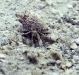 Unidentified Hermit Crab