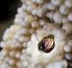 A tiny crustacean