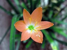 An orange one