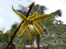 Orchid with weird background