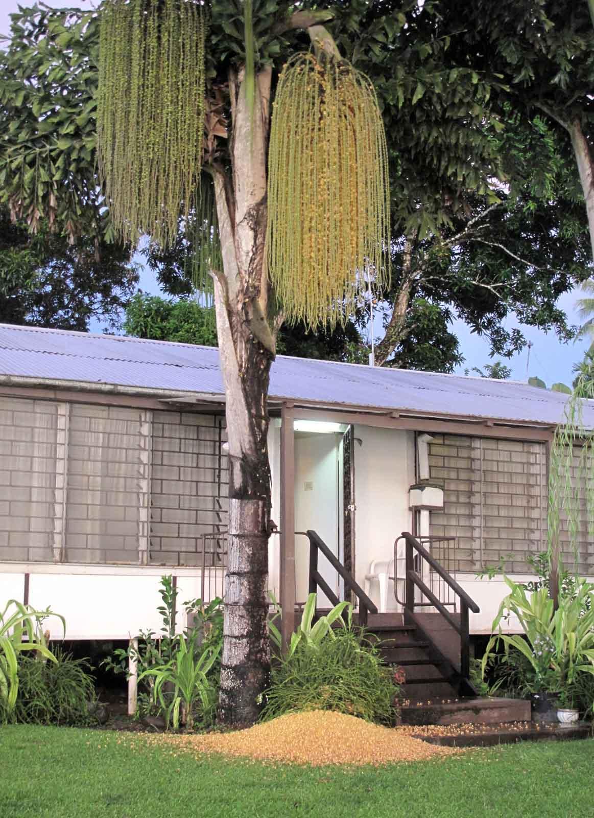 Fishtail palm