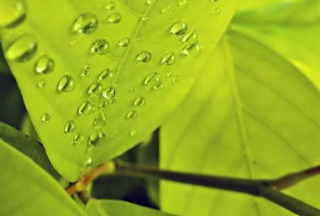 Water drops underneath a leaf