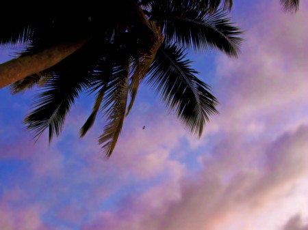 Coconut and Flying Fox Sunrise