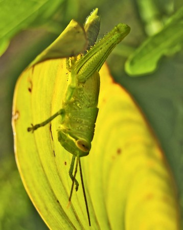 "Grasshopper ""hiding"" from me"