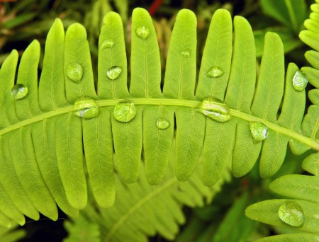 Fern with water drops