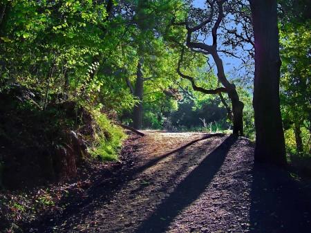 Berkeley Nature Walk by Steven Goodheart