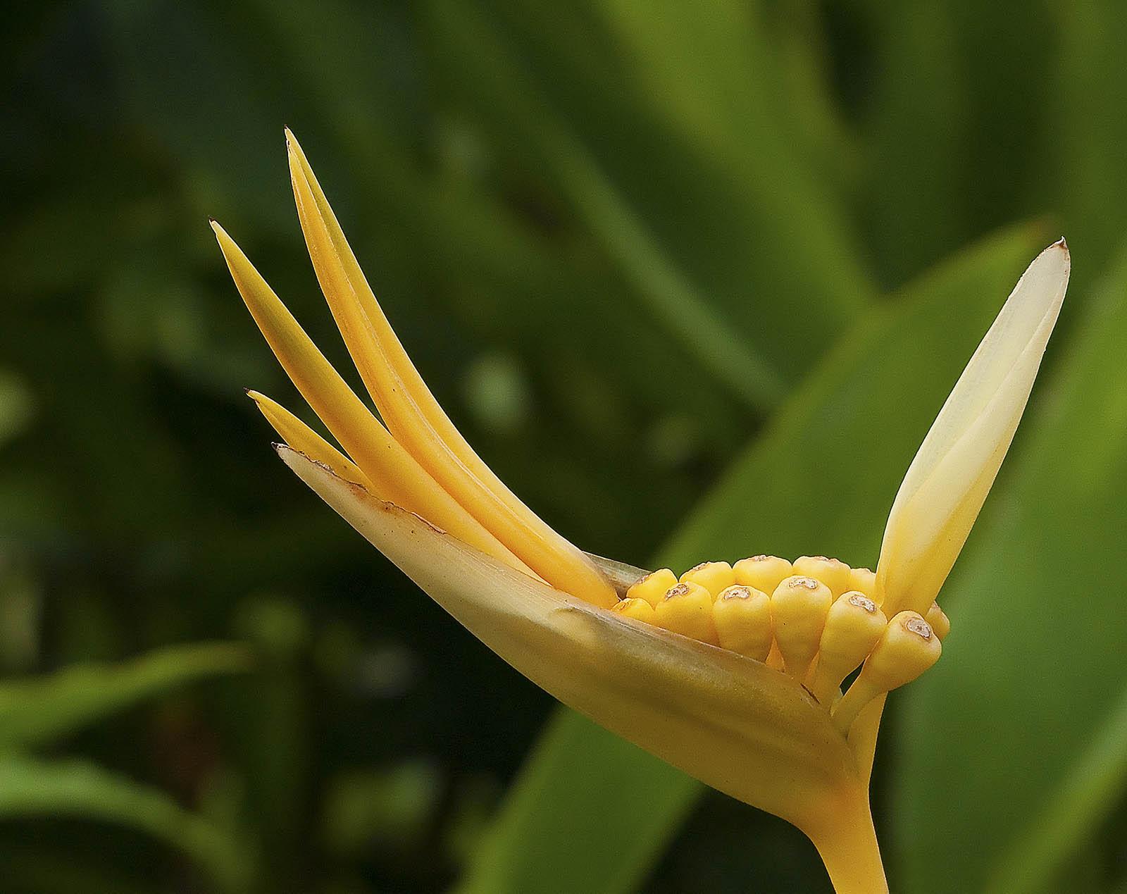 Фото цветка женская радость