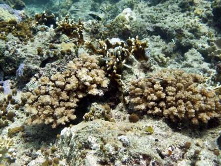 Reef Community
