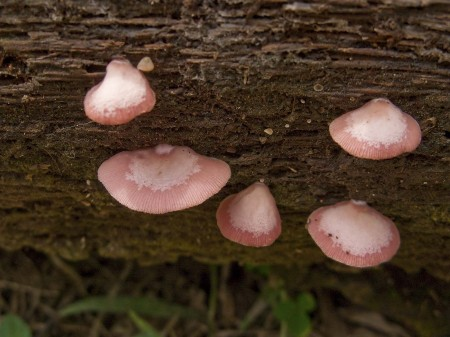 Trippy pink fungi on Nob Nob Mountain