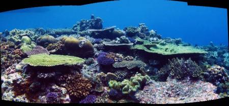 Reef Panorama 3