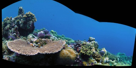 Reef Panorama 2