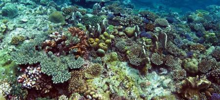 Reef Panorama 1