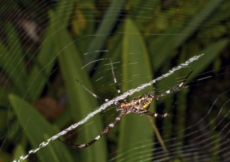 Big juicy spider