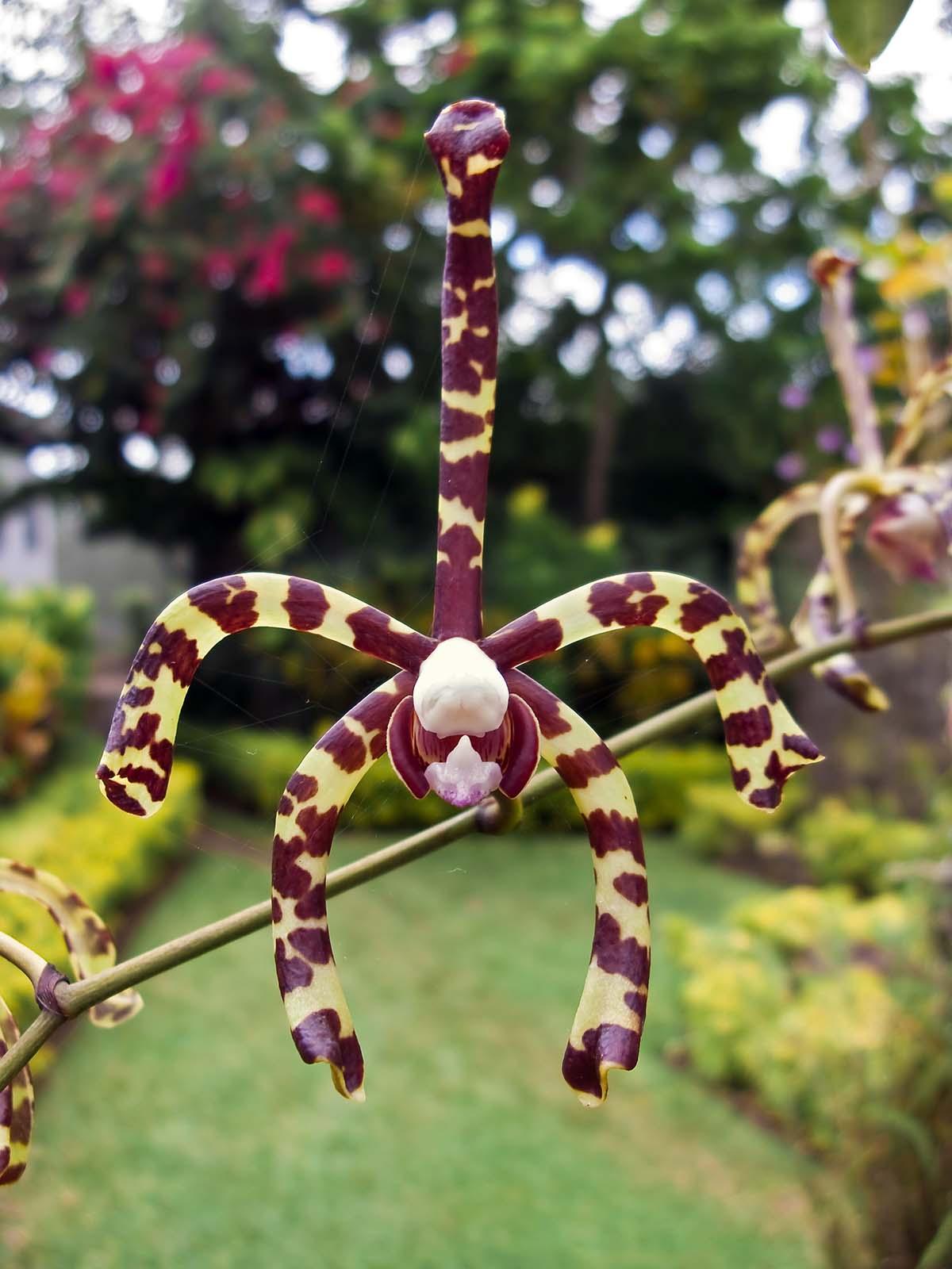 madang � ples bilong mi 187 blog archive 187 orchids orchids