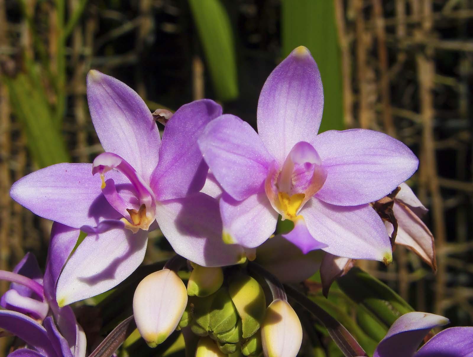 Orchids, Orchids, Orchids | Madang - Ples Bilong Mi