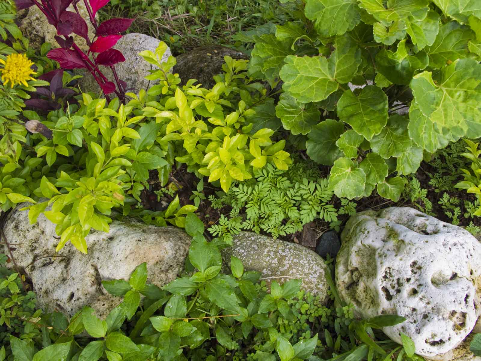 Landscaping Rocks Names : Garden rocks with names http messersmith wordpress tag