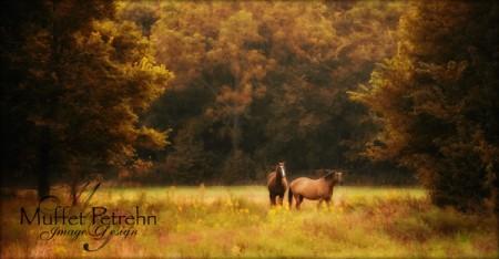 Cheyenne Autumn by Muffet Petrehn