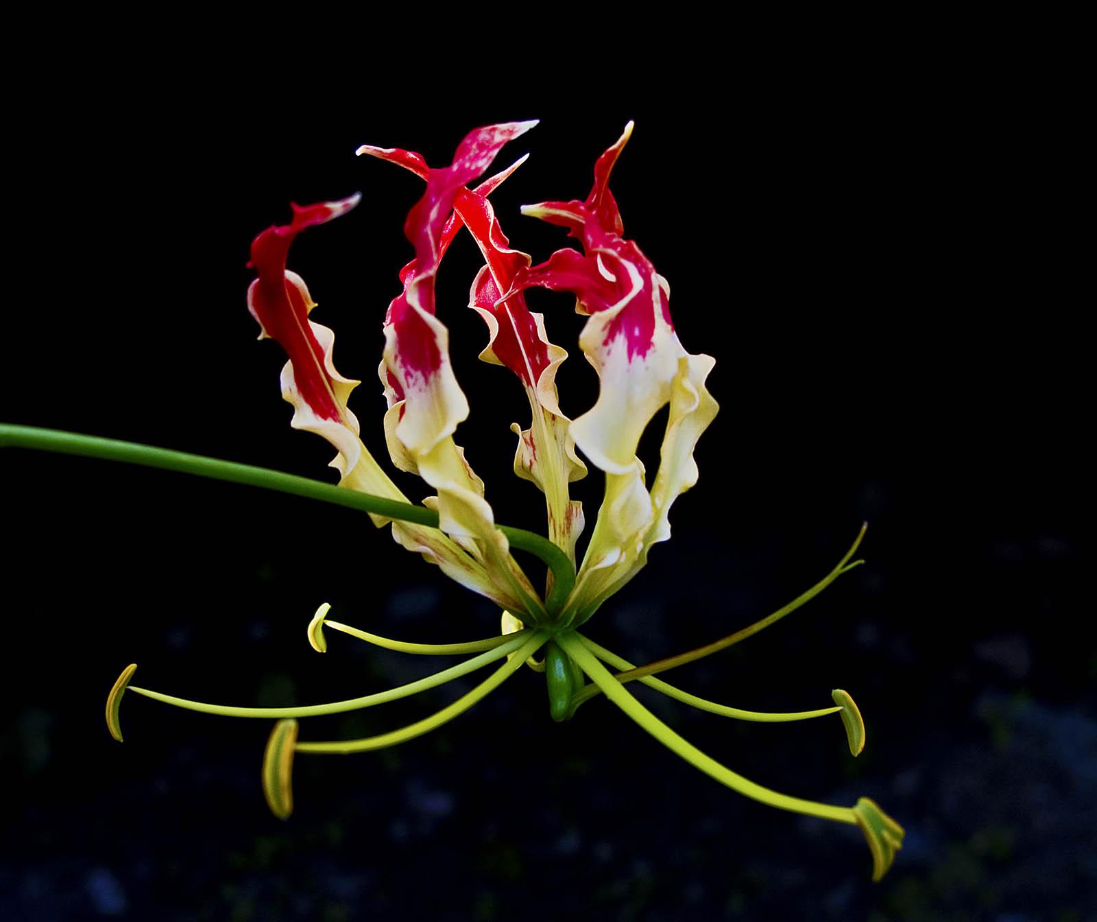 Flowermania madang ples bilong mi you izmirmasajfo