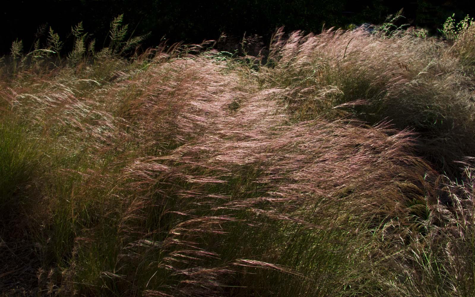 Desert Grass HD Wide Wallpaper for Widescreen