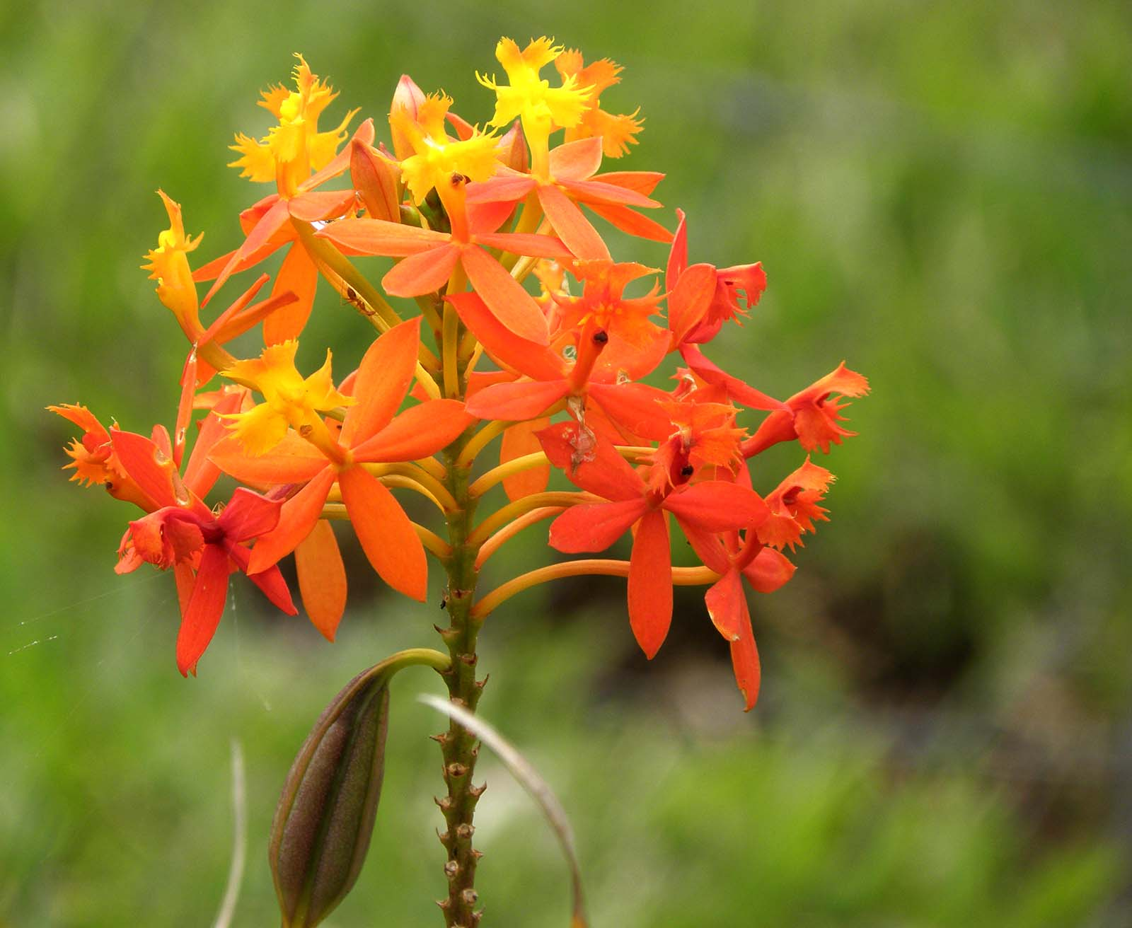 Orange Flowers Names And Pictures Euffslemani